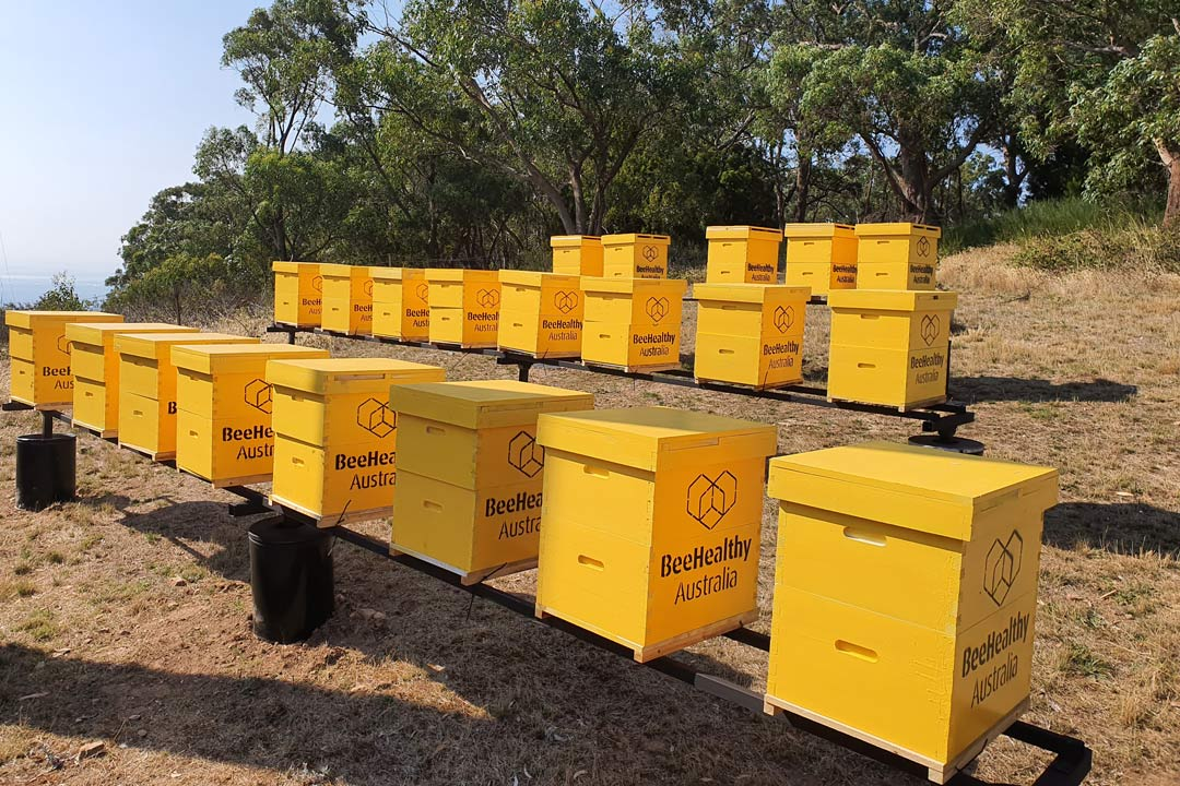 Bee Healthy Australia